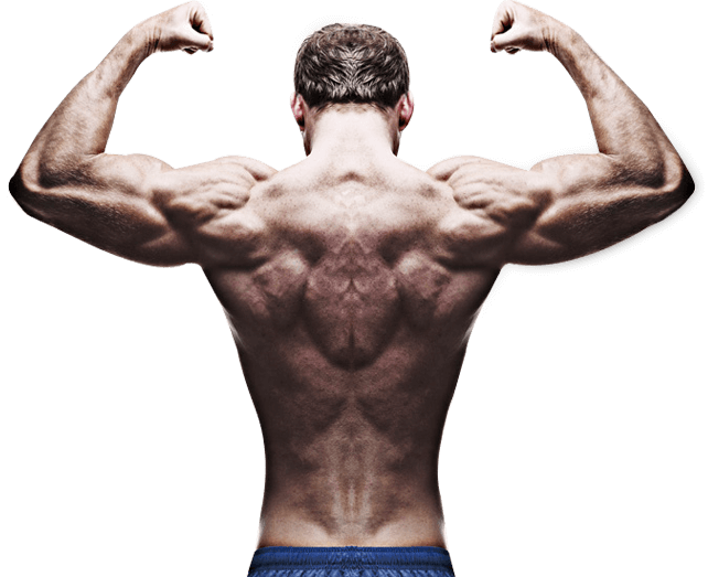 whey protein helps in muscle building